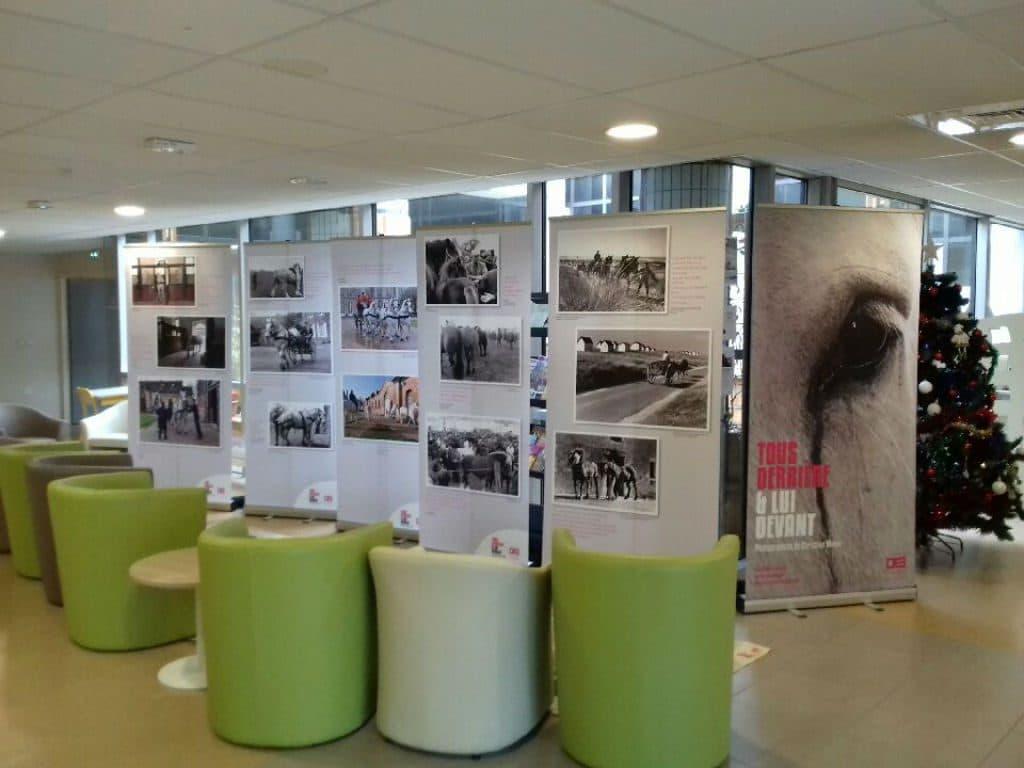Le CMPR «La Clairière» accueille une exposition sur les chevaux de Normandie